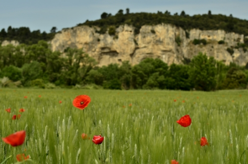 Landschaftsimpressionen der Provence
